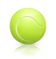 Tennis-ball vector image