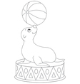 Circus seal equilibrist vector image