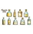 stylish color tequila glass bottle set vector image vector image