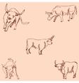 Bulls Sketch pencil Drawing by hand Vintage vector image vector image