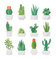 cartoon cactus and succulents in pots set vector image vector image