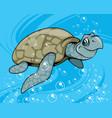 cartoon waterfowl turtle vector image
