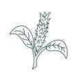 flower leaf design template vector image