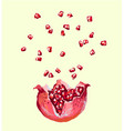pomegranate seed splash explosion opened vector image