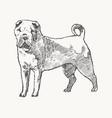 shar pei hand drawn dog realistic sketch vector image vector image