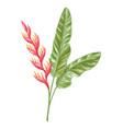 tropical heliconia flower vector image