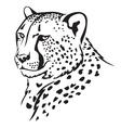 cheetah vector image vector image
