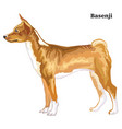 colored decorative standing portrait of basenji vector image vector image