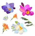 freesia flowers and branches for your design vector image
