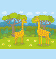 happy giraffes vector image