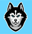 husky dog head mascot vector image