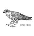 northern goshawk wild forest bird of prey hand vector image
