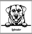 labrador - peeking dogs - - breed face head vector image vector image