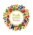 fresh organic summer berries and fruits healthy vector image vector image