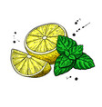 lemons and mint drawing hand drawn slice vector image vector image