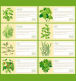 natural herbal spices with description banners set vector image