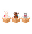 pets in boxes vector image