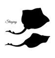 silhouette stingray vector image