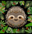 sloth head face portrait gray fur cartoon style vector image