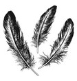 the set of natural feather bird hand drawn vector image vector image