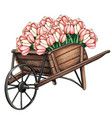 wooden wheelbarrow full tulips vector image