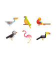 birds set toucan pelican flamingo parrot bird vector image vector image