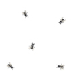 Flies on paper vector image