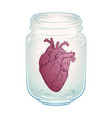 human heart in glass jar isolated sticker print vector image vector image
