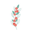 leaves foliage berry botanical on white background vector image
