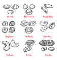 set of nuts design elements for poster menu vector image