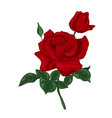 single red rose vector image vector image