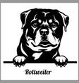 rottweiler - peeking dogs - breed face head vector image vector image