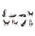 siberian husky character sett dog in different vector image vector image
