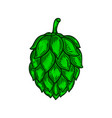 beer hop in engraving style design element for vector image vector image