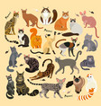 cat breeds cute pet animal set 21 cats vector image vector image