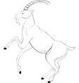 goat sketch vector image vector image
