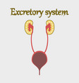 human organ icon in flat style excretory system vector image