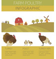 poultry farming turkey family isolated on white vector image vector image