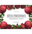 design of hand drawn pomegranate vintage vector image vector image