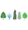 different tropical leaves on white background vector image vector image