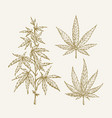 hand drawn cannabis hemp branch with leaves vector image
