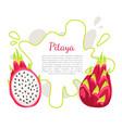 pitaya pitahaya exotic juicy fruit poster vector image vector image