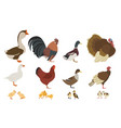 poultry farming chicken turkey duck goose family vector image vector image