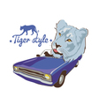 blue tiger violet car driver vector image
