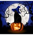 black cat and pumpkin vector image