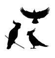 Cockatoo bird silhouettes vector image