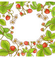 strawberry plant frame vector image