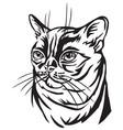 decorative portrait of burmese cat vector image