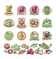 vegetables logo healthy vegetably logotype vector image