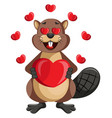 beaver in love on white background vector image vector image